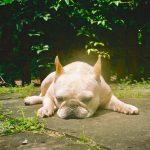 "New Music: Asher Roth – ""Mommydog"""